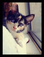 The cute Cat by livyer