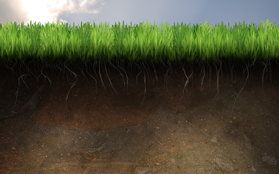 Soil and Grass by FoxSilver