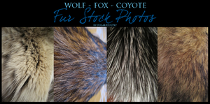 Fur Stock by sugarpoultry