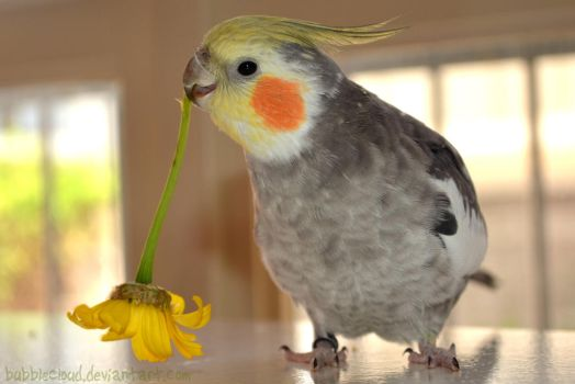 Happy May from Loofy! by BubbleCloud