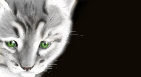 Kitten Coloured by sithness