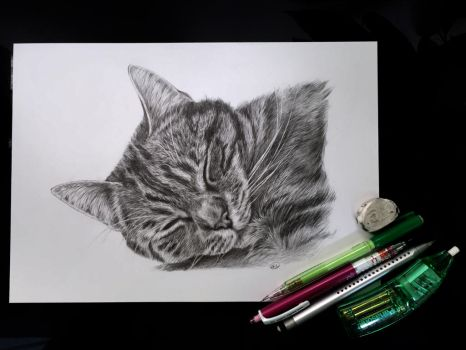 Sleeping Tabby Cat Pet Portrait With Pencils by CatAclysmArt