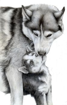 Husky Love by Quinneys
