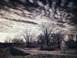 Light of the Setting Sun - 7 of 8 by KBeezie