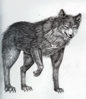 Tsuge wolf form by CinnamonSoldier