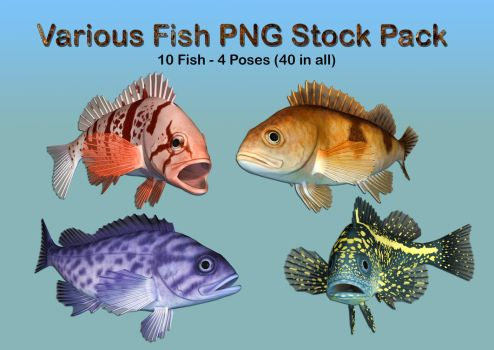 Various Fish PNG Stock Pack by Roy3D