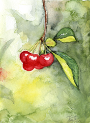 Cherries Watercolor by LaFoi
