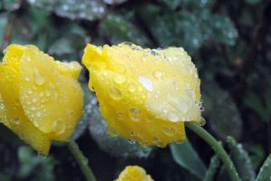 Yellow with a drop of rain by LizzDurr121