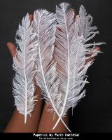 Papercut - Feather - Papercutting - Paper art by ParthKothekar