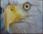 Eagle EYe by KMAP3156