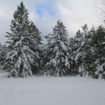 Winter Wonderland 1 by A-Fox-Of-Fiction