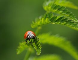 out of the green... by clochartist-photo