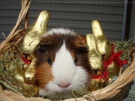 Fritzi with chocolate easter bunnys - stock by Calitha-Lena
