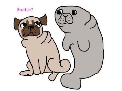 pug and manatee by Maggot-Lungs