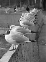 Seagulls. by one-slip
