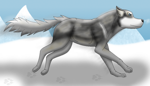 How I draw a Siberian Huskey (request) download by horse14t