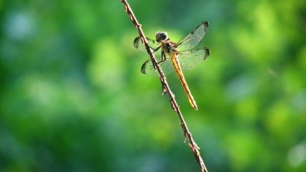 Dragonfly on a Stick 02 by Insect-Lovers-Club