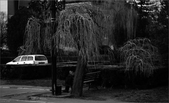 Man on Bench under Willow 2 by Noe-Me