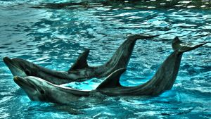 Dolphins posing politely by herbalcell