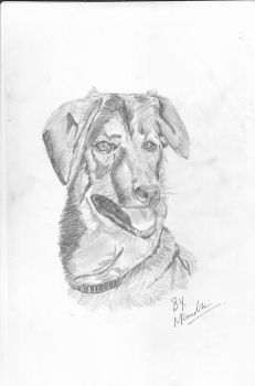 Dog - sketch by DemiSwift