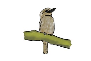 Kookaburra - Drawing by IceRazer666