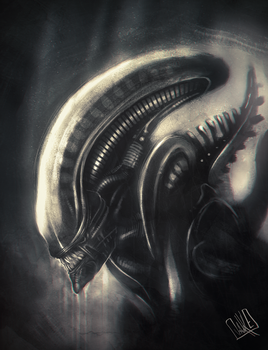 Xenomorph sketch by JakkeV