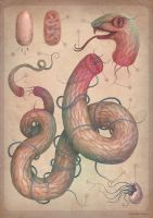 Serpent analysis by V-L-A-D-I-M-I-R