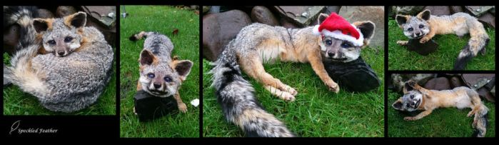 Commission Blue-eyed Gray Fox by Speckled-Feather-UK