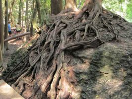 Roots 5 by Buttercup76