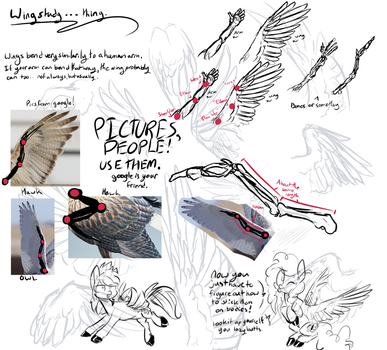 A bit of Wing study by 8-Xenon-8
