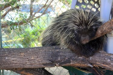 Porcupine by visualize-this