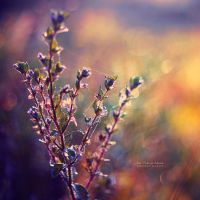 Miracles by John-Peter