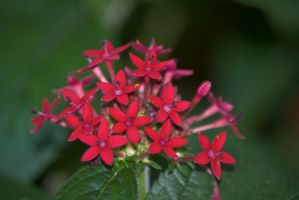 Some more red flowers by chalkwebdesign