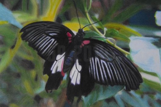 Black Tropical Butterfly by Starfire-Productions