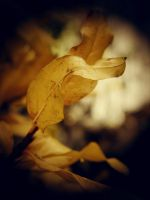 Autumn leaf by blackangel212