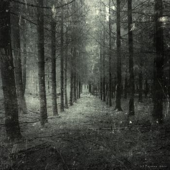 They choose the path where no one goes by Pajunen