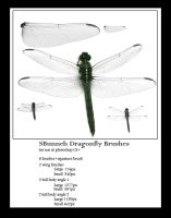 Dragonfly Brushes by AnotherJamesDean