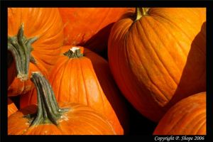 Fall Pumpkins by pshope