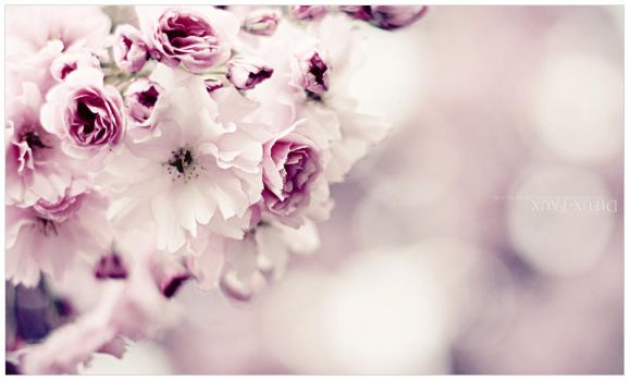 Blossom by Geekisthecolour