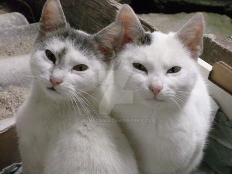 Snowbell and Mieunel
