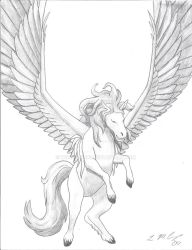 pegasus by WindSong83