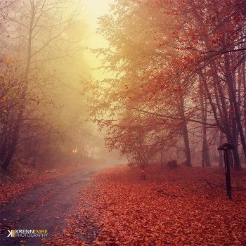 The last leafs in November by piximi