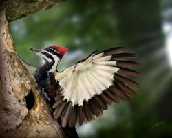 Pileated Woodpecker by bonbon3272