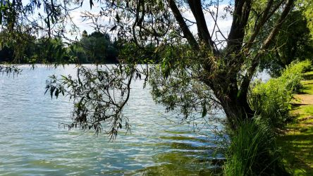 Stanborough Lakes by Daniel-Wales-Images