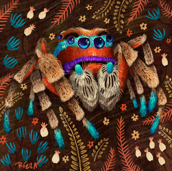Jumping Spider by AngelaRizza