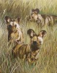 animal practice - wild dogs by Robza
