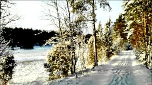 The Afternoon Before The Evenings Snowfall Jan 12 by eskile