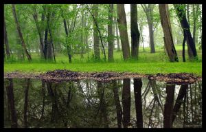 Muddled Reflections by DwayneF