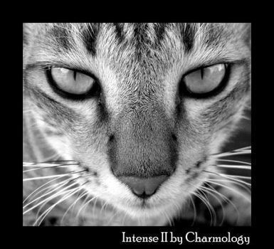 Intense II by Charmology