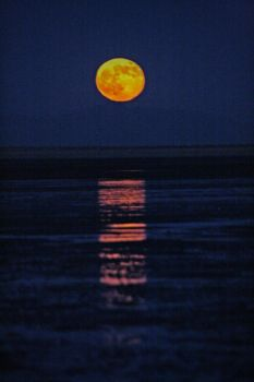 Cholla Bay's Harvest Moon by notagak